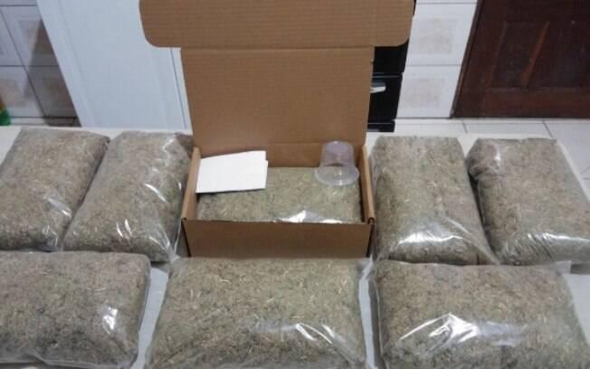 Remédio vendido para artrose contém em sua formulação a planta Miconia albicans desidratada e triturada