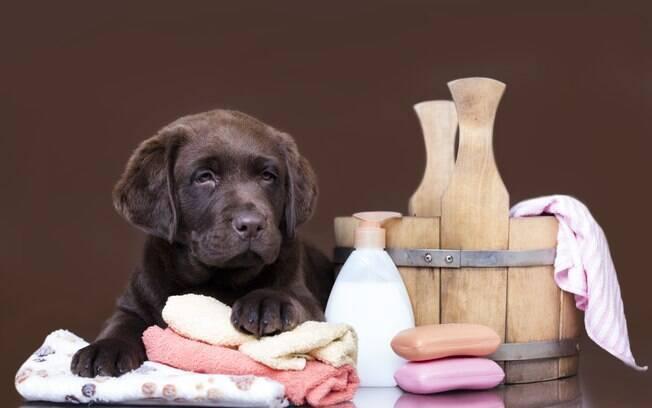 Banho e tosa são apenas dois dos vários serviços oferecidos pelo spa para cachorro