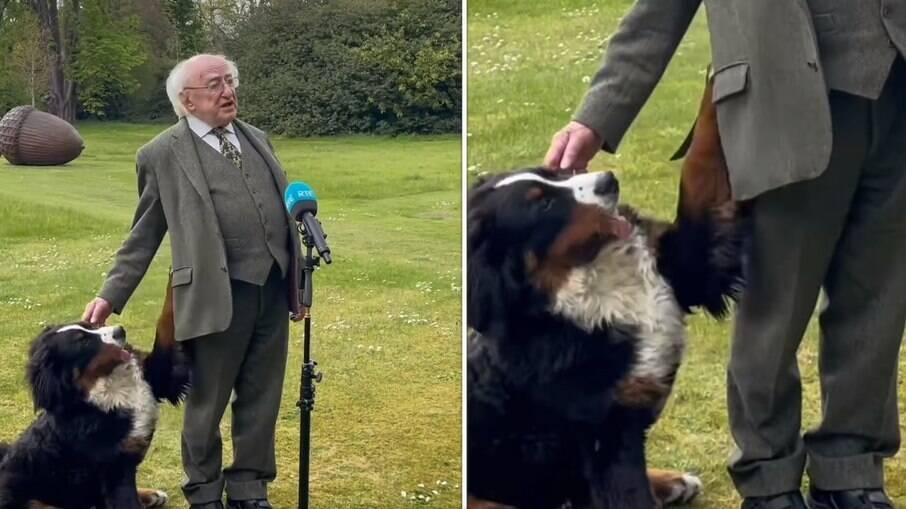 Presidente Irlandês é interrompido por cachorro durante entrevista