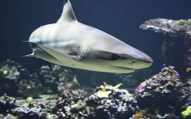 Esse tubarão surpreendeu o homem, que enfrentou o animal e teve atitude corajosa