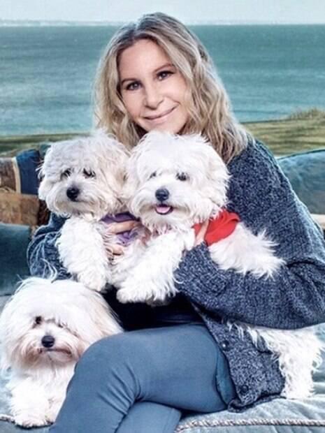 Barbra Streisand freta jatinho para suas três cachorras irem à Londres