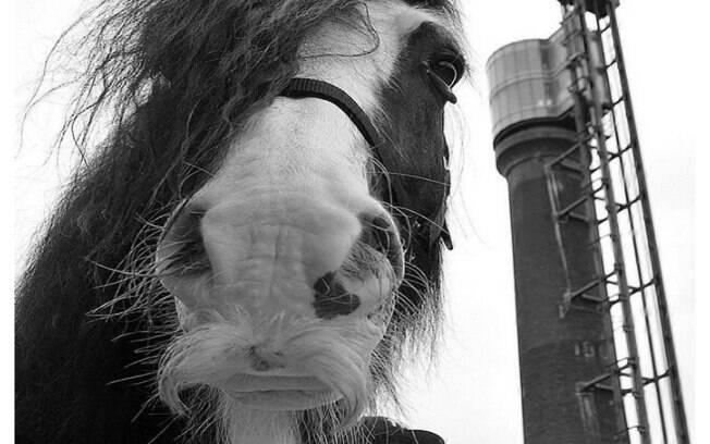 Esses cavalos possuem um gene específico que faz com que tenham bigode