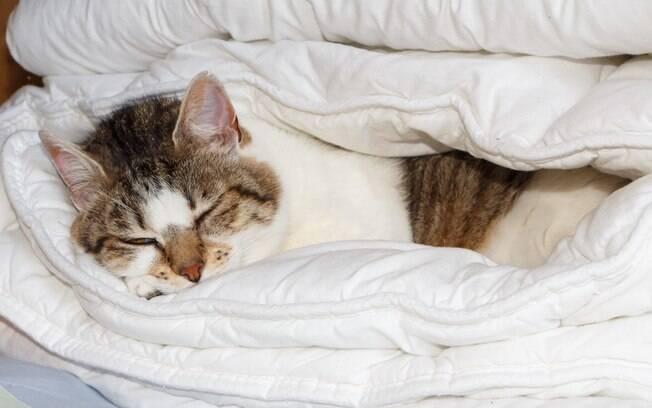 Apesar de ser uma prática muito comum, ainda existem dúvidas sobre os benefícios e malefícios de dormir com o pet