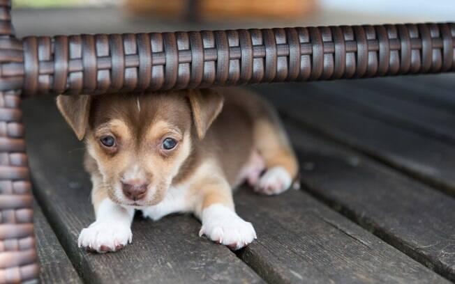 Muitos cachorros tem medo de pessoas e se recusam a sair de casa