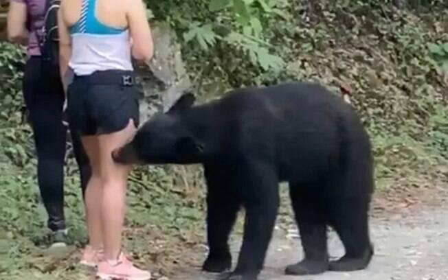 Urso abordou as garotas.