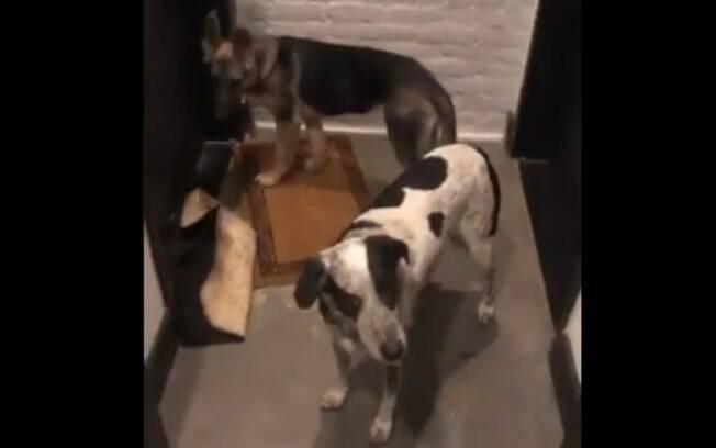 Os animais fofos que estavam do lado de fora da casa de JP eram dois cachorros e um gato