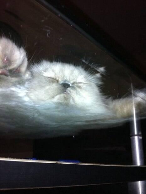 Mesinha de centro é a melhor cama para gatos e nós iremos provar