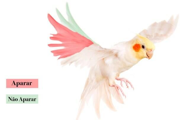 aparar as asas