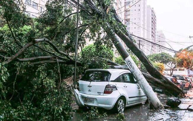 Árvore caiu sobre carro e derrubou poste na rua Inácio de Araújo, região do Brás, zona central de São Paulo
