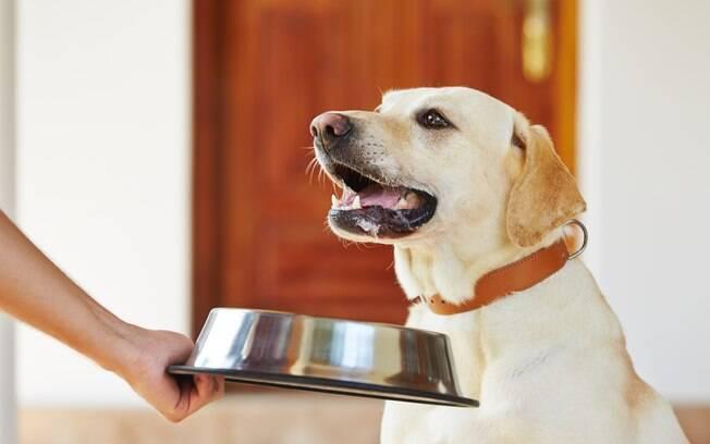 A composição nutricional da alimentação natural para cães deve ser feita sob a orientação de um médico veterinário nutricionista