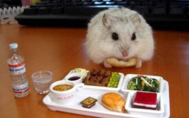 Conheça os alimentos proibidos para hamster para oferecê-los por engano