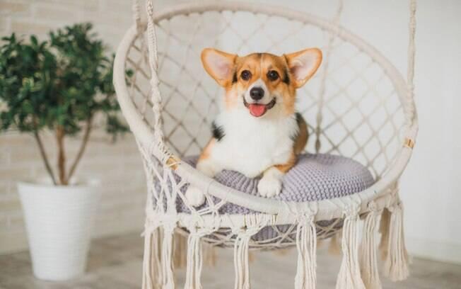 Pets e decoração: saiba como adaptar a casa para o conforto dos animais