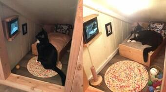 Homem constrói quarto para gato em espaço embaixo da escada