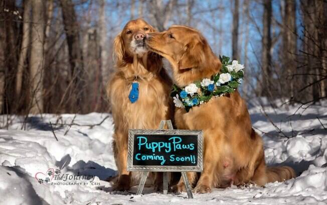 Casal de cachorros, moradores do Program de Cães de Serviço, ganham uma sessão de fotos muito especial para celebrar a gravidez