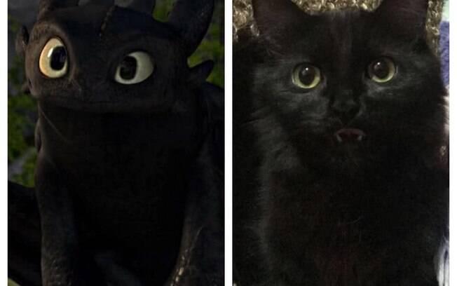 Gato parecido com Banguela, do filme Como Treinar o Seu Dragão