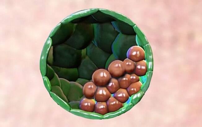 Por mais que outras pesquisas tenham criado um embrião com células-tronco, pela primeira vez um foi implantado no útero