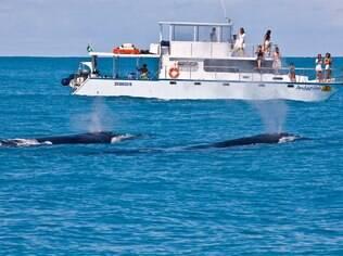 A observação de baleias é um espetáculo inesquecível