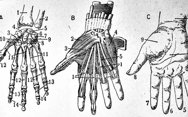Imagine a vida sem as mãos!