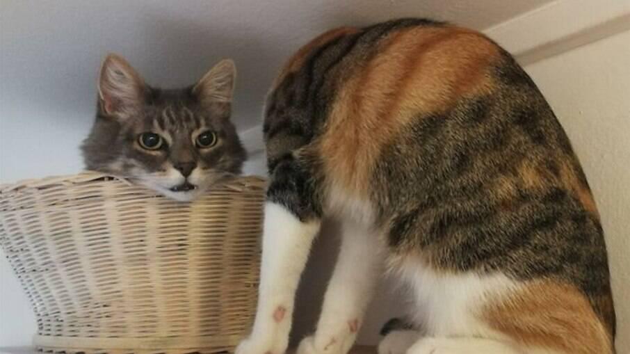 Viraliza foto de gato sem cabeça