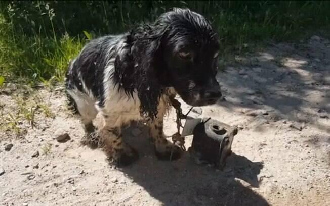 Cão é encontrado abandonado em estrada e com um metal preso em seu pescoço