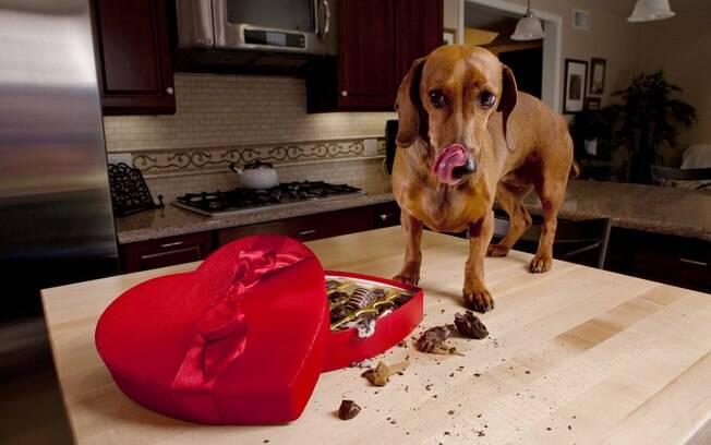 O chocolate está entre os alimentos proibidos para cachorro