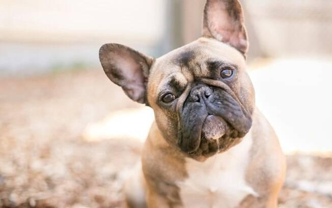 Os cruzamentos de raças podem estar causando transtornos comportamentais nos cães