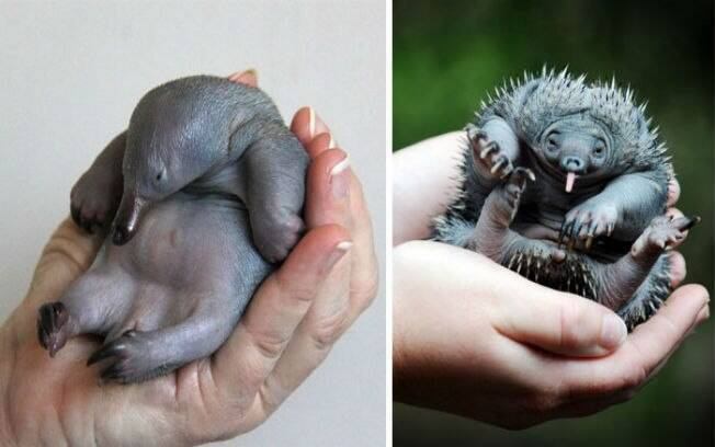 Esses filhotes de animais raros são a coisa mais fofa