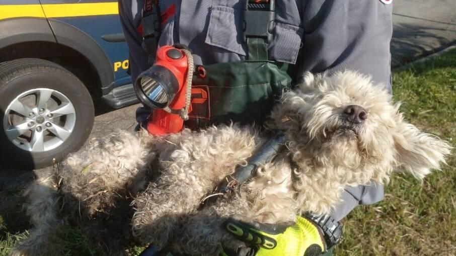 Cachorro é abandonado em rodovia, cai em bueiro, mas é adotado por homem que presenciou tudo
