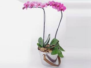 Reforce a beleza das orquídeas