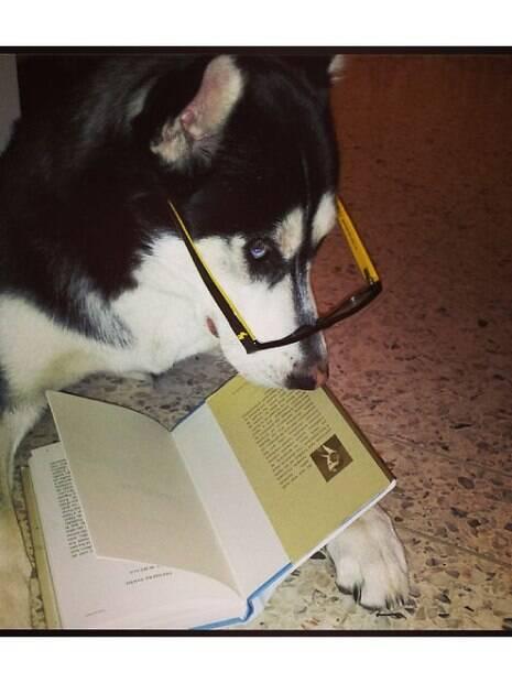 Cães protagonizam fotos engraçadas por agirem como humanos