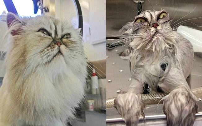 Gatinho antes e depois de tomar banho.