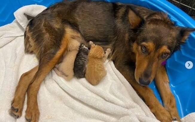 Georgia e seus filhotes adotivos