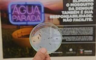 Com chegada do verão, campanha nacional alerta para combate a mosquito da dengue