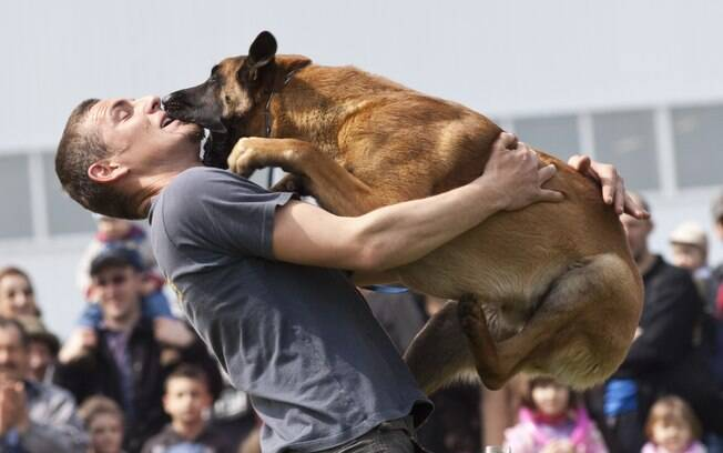 Dependendo do tamanho que tiver, o cachorro que pula pode machucar a pessoa