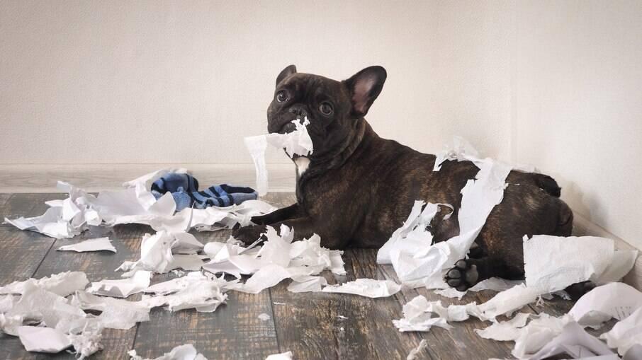 A textura do papel é atrativa para os cães