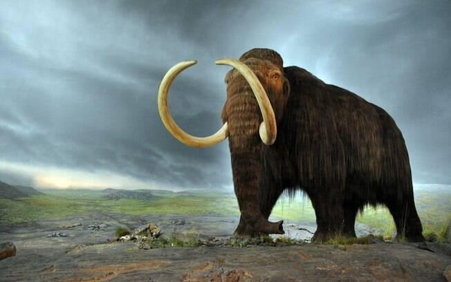 Extinto há aproximadamente cinco mil anos, mamute viveu na Ásia, África, America do Norte e Europa na Era do Gelo
