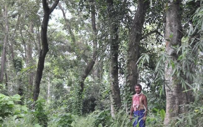 A floresta agora abriga centenas de espécies vegetais e até mesmo animais como tigres de bengala em algumas épocas