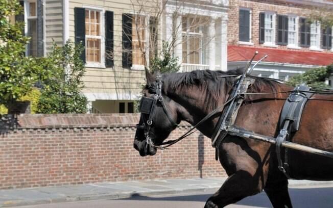 Casarões preservados de Charleston podem ser conhecidos em um passeio de charrete