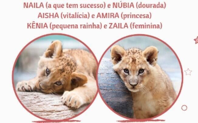 As duas novas integrantes do Zoológico de São Paulo nasceram em maio e foram apresentadas ao público nesta semana