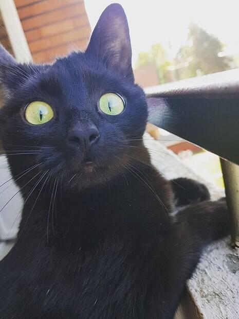 Gata sai na varanda pela primeira vez e tem expressão hilária