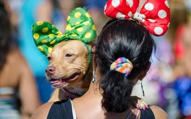 O animal deve se sentir confortável com a fantasia de carnaval