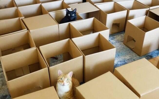 Dono constrói um labirinto para seus gatos em comemoração ao Dia Internacional do Gato