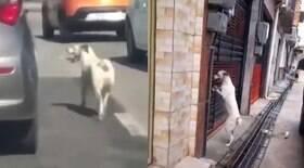 Cão é largado em avenida e segue os donos