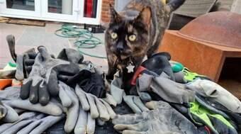 Gata faz coleção com luvas roubadas no pátio dos donos