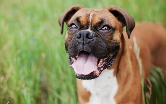 Se você optar por castrar a sua cadela, não faça isso durante o período do cio