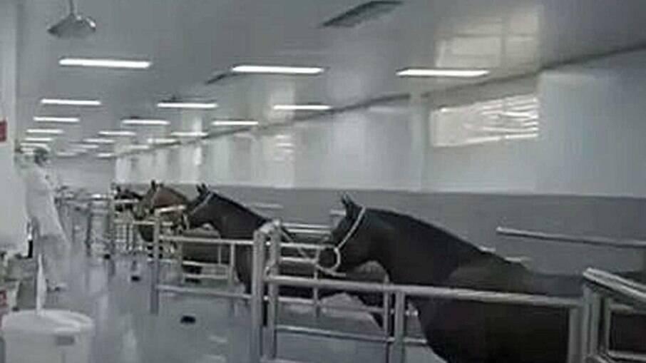 Para a produção do soro, os técnicos retiram o plasma - que faz parte do sangue - do cavalo e levam para a sede do Butantan, na Zona Oeste de São Paulo