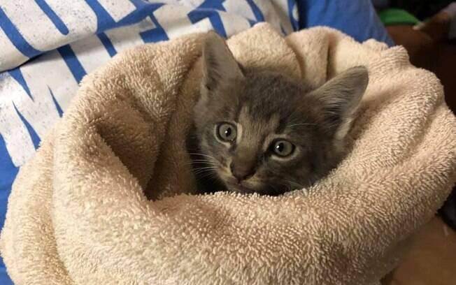 Filhote de gato resgatado