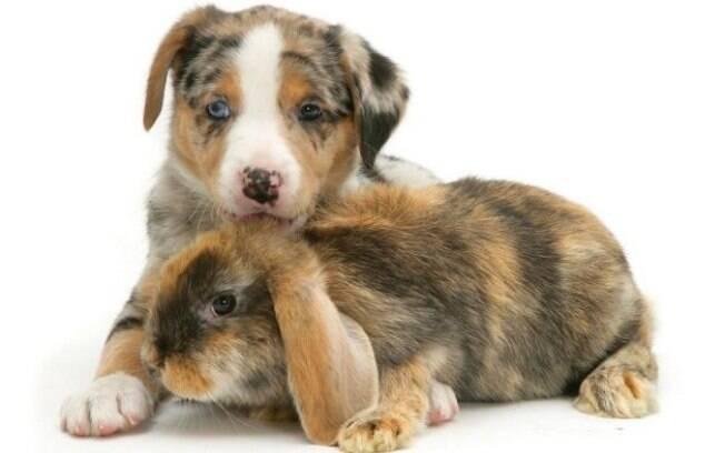 Cachorro e coelho.