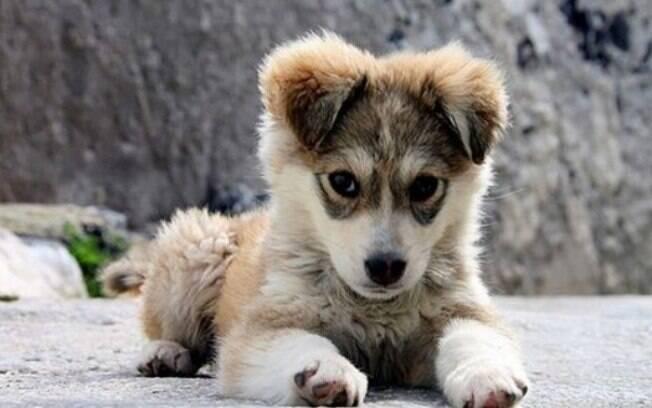 Procurar um cachorro perdido pode não ser tarefa fácil
