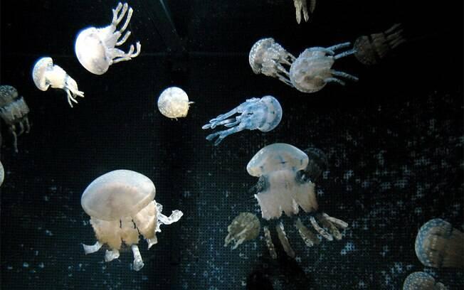 Em Okinawa, animais que vivem próximos à superfície do mar, espécies que vivem em alto mar e criaturas que habitam as profundezas escuras do oceano